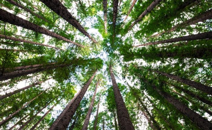 arbres-ciel